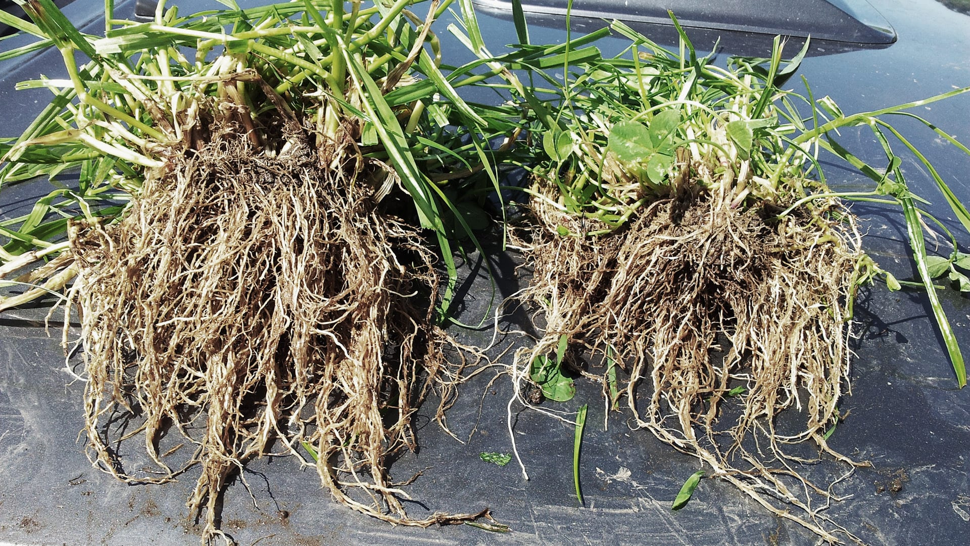 Organic growth agent