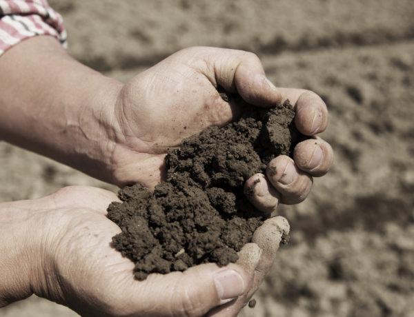 soil-new